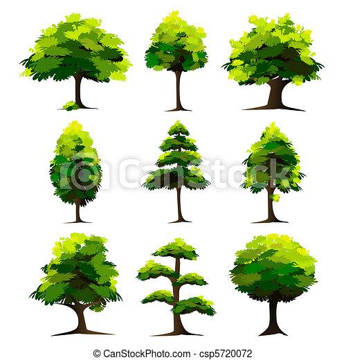 세트, 나무 - csp5720072