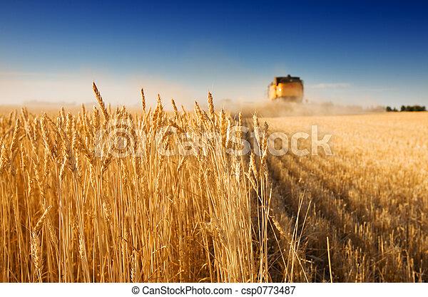 수확 시간 - csp0773487
