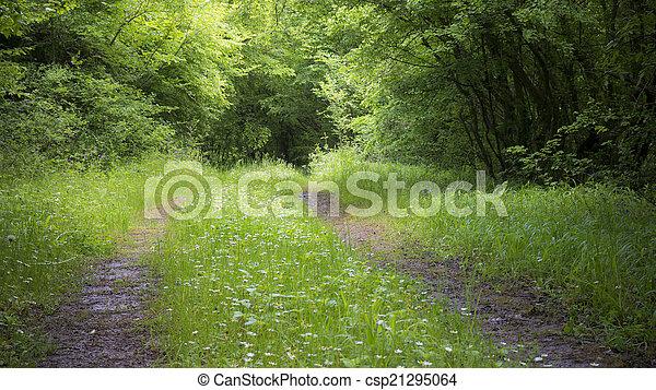 숲, 길, 평화로운 - csp21295064