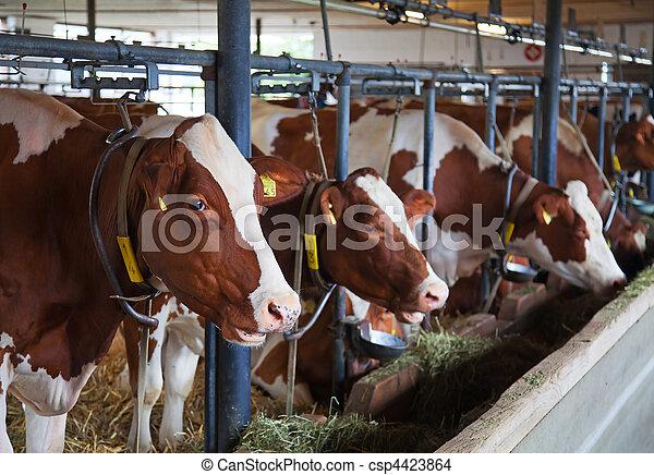 스위스어, 농장 - csp4423864