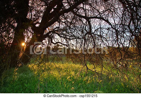 시골, 봄 - csp1551215