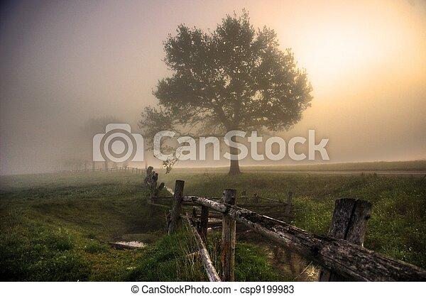 시골, 안개가 지욱한, 아침 - csp9199983