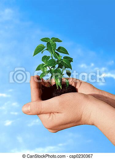 식물, 손 - csp0230367