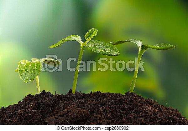 식물, 인생, 개념, 나이 적은 편의, 새로운, 지구 - csp26809021