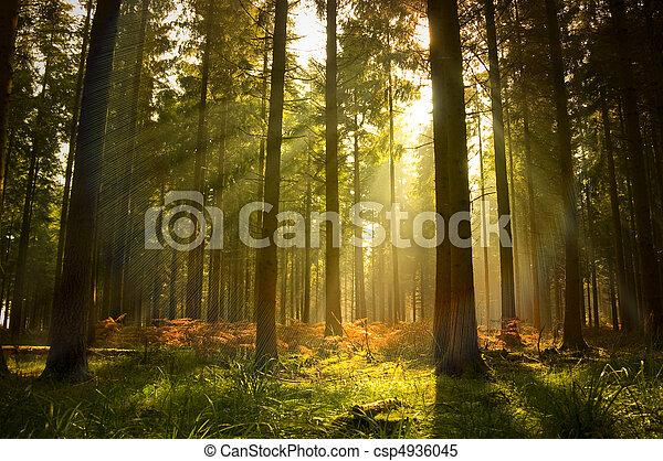 아름다운, 숲 - csp4936045