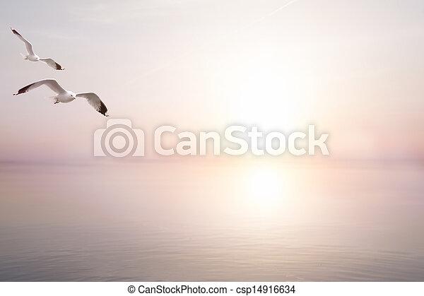 아름다운, 여름, 예술, 바다, 빛, 떼어내다, 배경 - csp14916634