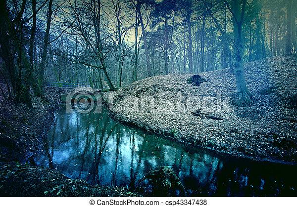 암흑, forest., 마술적인, 신비적인 - csp43347438
