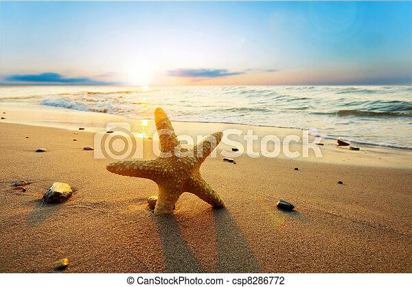 여름, 바닷가, 명란한, 불가사리 - csp8286772