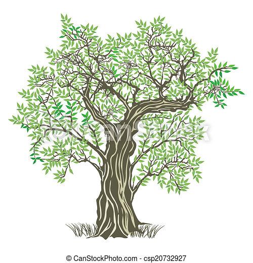 올리브나무의 가지, 오래되었던 나무 벡터 일러스트레션 - 클립아트, 도면 그리고 EPS 그래픽 이미지 ...