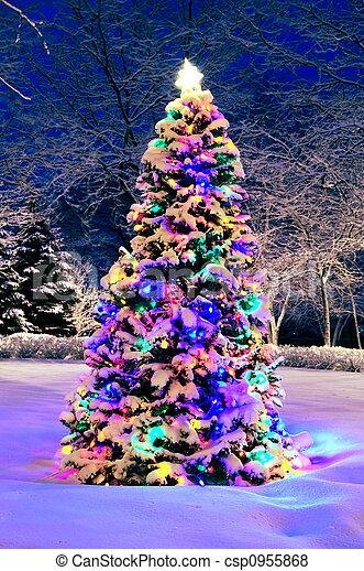 외부, 나무, 크리스마스 - csp0955868