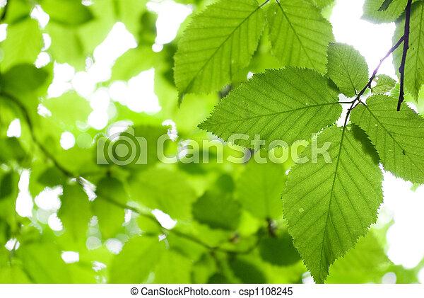 잎, 녹색 - csp1108245