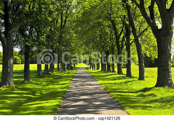 좁은 길, 공원, 녹색 - csp1421126