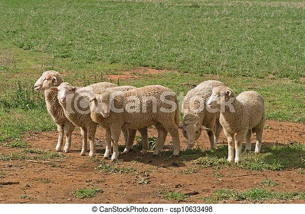 포유동물 - csp10633498