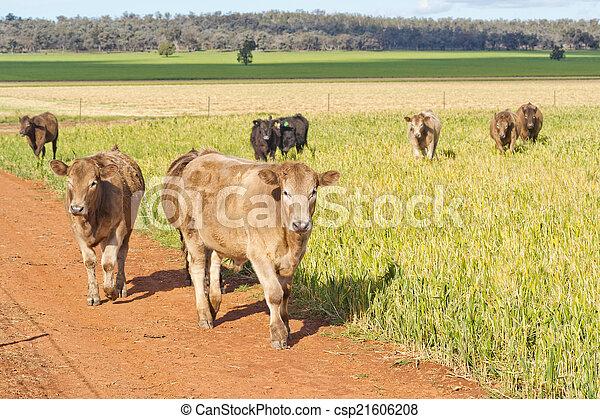 포유동물 - csp21606208