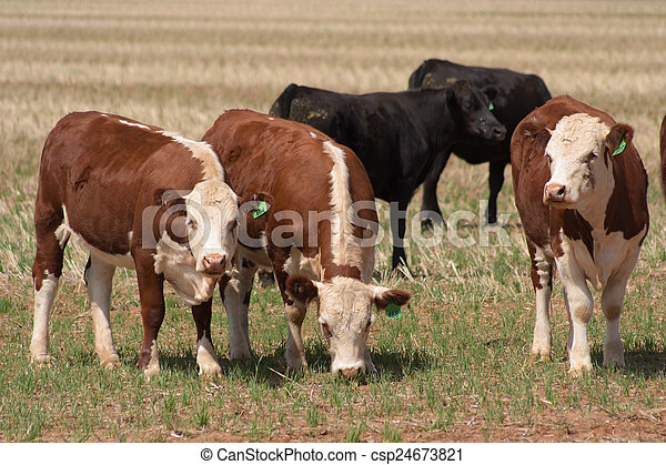 포유동물 - csp24673821