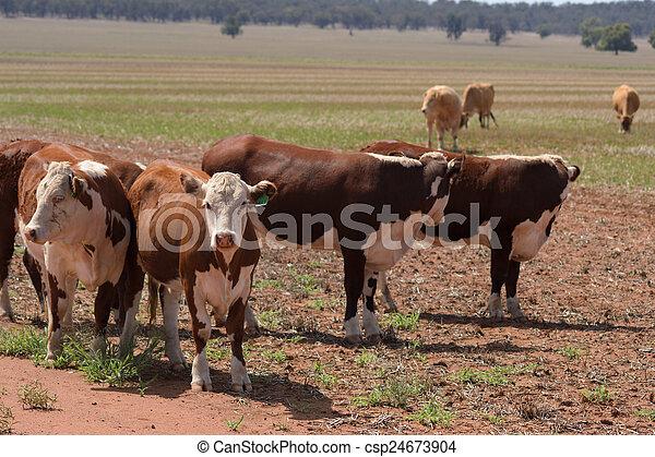 포유동물 - csp24673904
