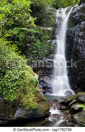 폭포, 숲 - csp1783756