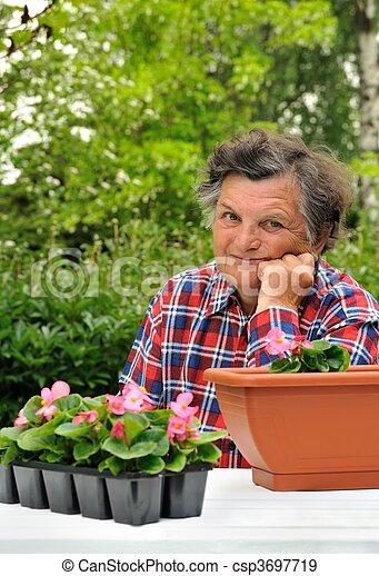 - , ανώτερος γυναίκα , κηπουρική  - csp3697719