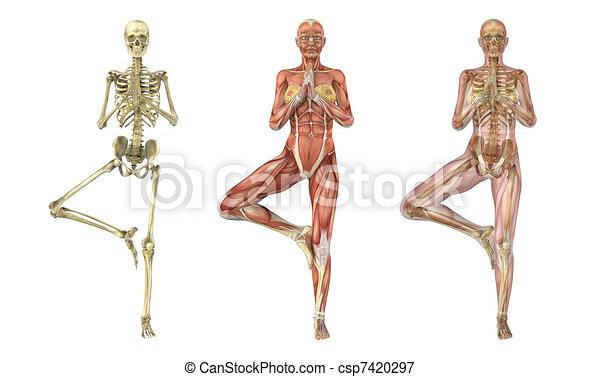 Posesión de Yoga, capas anatómicas - csp7420297