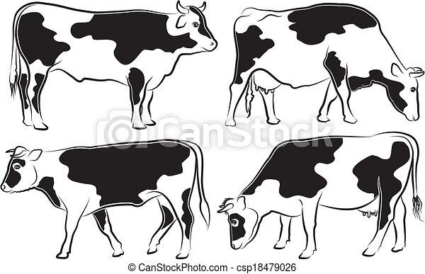 Vaca y toro - csp18479026