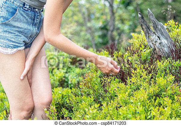 -, vybírání, blueberries, manželka, borůvka, mládě - csp84171203