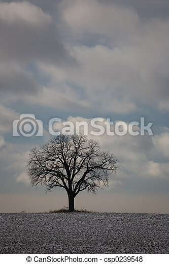 01, boom winter, natuur - csp0239548