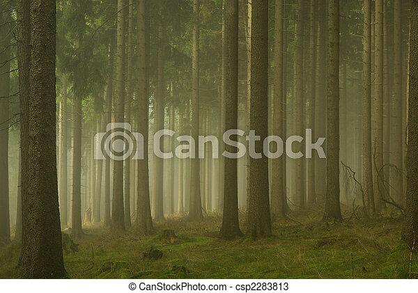 01, nevoeiro, floresta - csp2283813