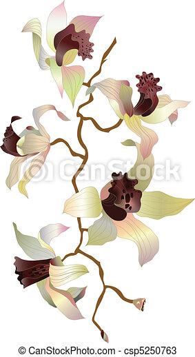1, ramo, orchidea - csp5250763