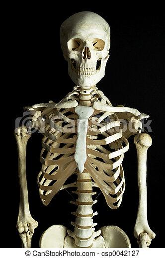 1, squelette - csp0042127