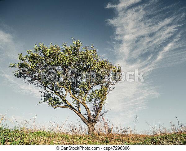 1 tree in field - csp47296306