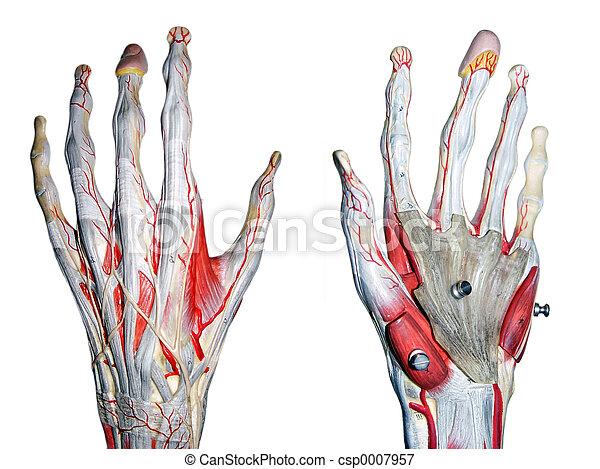 2 hands - csp0007957