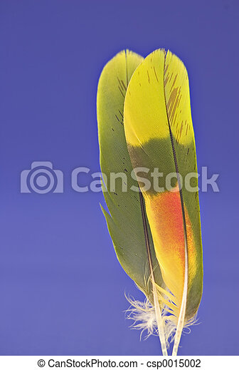 2 parrot feathers b - csp0015002