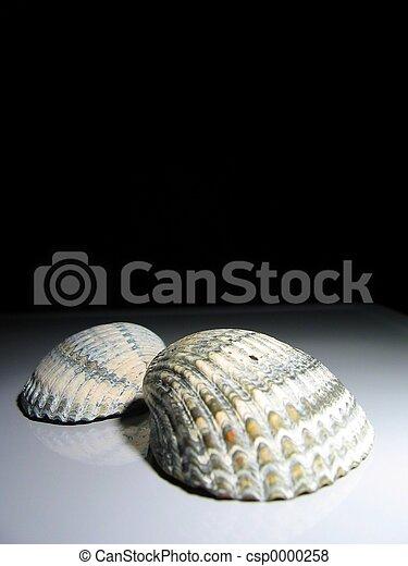 2 shells - csp0000258