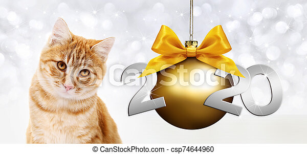 2020 happy new year number text, ginger pet cat with golden christmas ball with ribbon bow isolated on silver blurred lights background - csp74644960