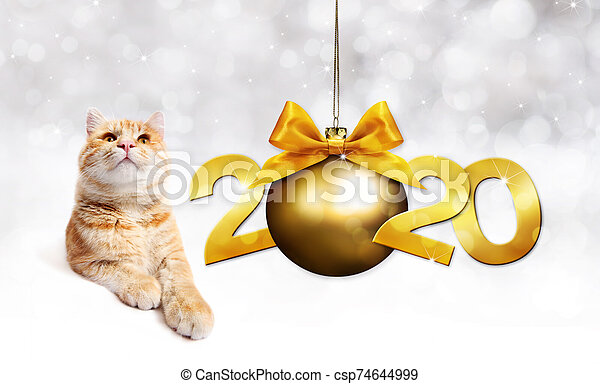 2020 happy new year number text, ginger pet cat with golden christmas ball with ribbon bow isolated on silver blurred lights background - csp74644999