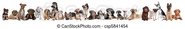 22 puppy dogs in a row - csp5841454