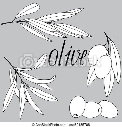 274, olive - csp80185708