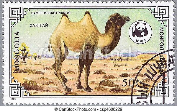 3, chameau - csp4608229