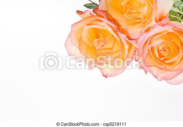 3 roses over white - csp5219111