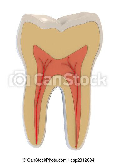 3d, anatomy, dental, dentist, health, illustration, medical, pulp, roots, science, tooth, vain  - csp2312694