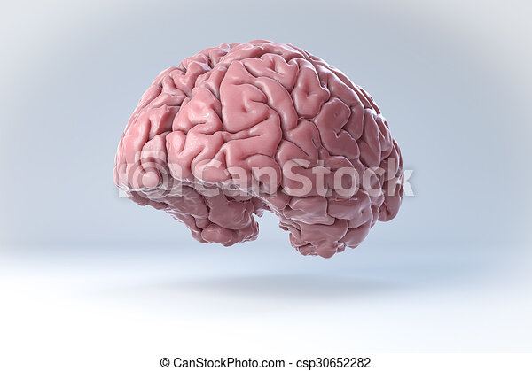 3D Human Brain Isolated