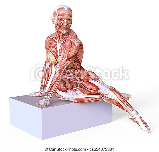 3d Illustration Female Body Without Skin Anatomy And Muscles