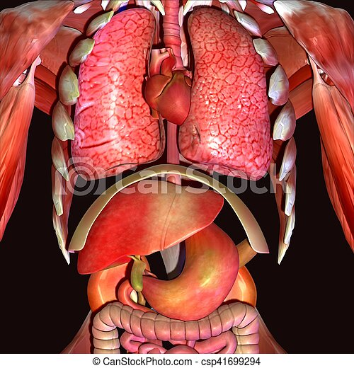 3d illustration human body organs. This article contains a list of ...