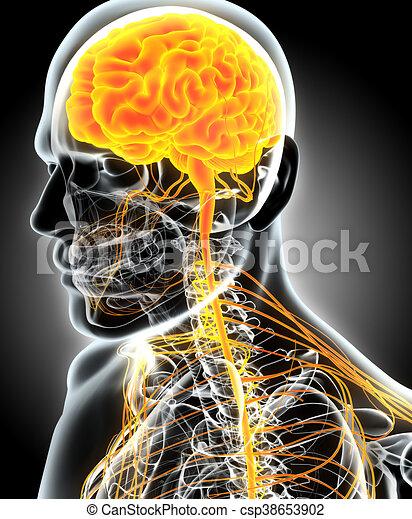 3D illustration male nervous system. - csp38653902