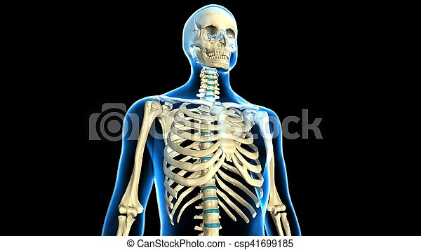 3d Illustration Of Human Body Ribs Cage Anatomy The Rib Cage Is An