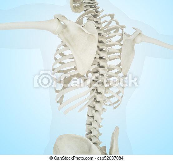 3d Illustration Of Human Skeleton Back 3d Llustration Stock