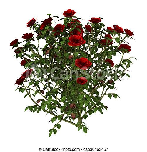 3d illustration red rose bush on white 3d illustration of a red