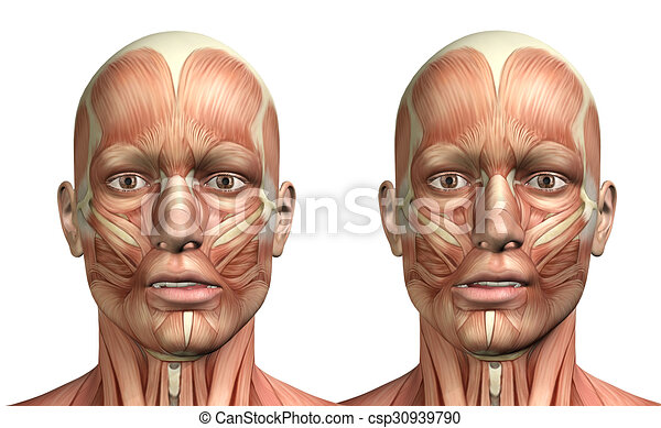 3D male medical figure showing mandible lateral deviation - csp30939790