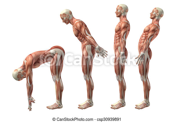 3D medical figure showing trunk flexion, extension and hyerextension - csp30939891
