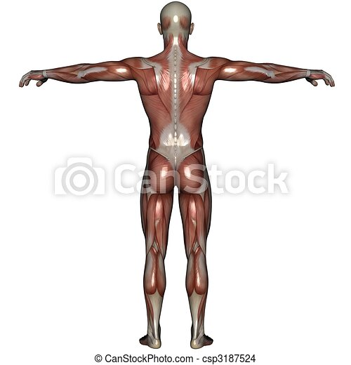 3D muscle of man - csp3187524